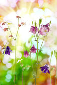 Flowers in the garden on a green background — Photo