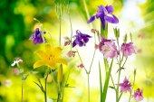 緑の背景に庭の花 — ストック写真