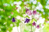 Beautiful wild flowers in the garden  — Stock Photo