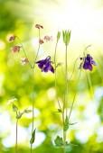 Beautiful wild flowers in the garden  — 图库照片