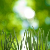 Growing grass  — Foto Stock