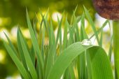Reeds near the water — Stock Photo