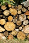 Image of dry firewood laid in a heap for kindling the furnace — Stock Photo