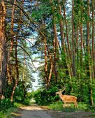 Deer in a forest — Stock Photo
