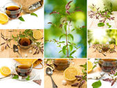 Image of cups of tea and mint — Stock Photo