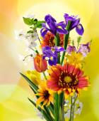 Image of many beautiful flowers in the garden — Stock Photo