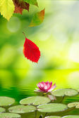 Falling autumn leaves and a lotus flower on the water — Stock Photo