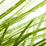 Image of fir branches closeup — Stock Photo #65382199