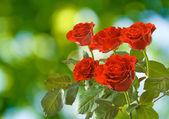 Muchas hermosas flores en el jardín — Foto de Stock