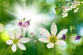 Цветы на зеленом фоне — Стоковое фото