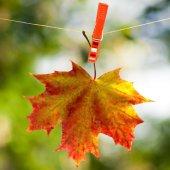 Autumn leaf on a rope  — Foto de Stock