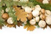Mushrooms and autumn leaves closeup — Stockfoto