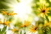 Image of beautiful flowers — Stock Photo