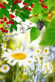 Fruit tree and different flowers in the garden — Stock Photo