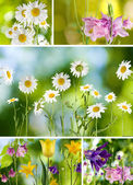 Mix different beautiful flowers — Stock Photo