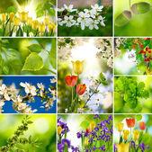 Many flower closeup — Stock Photo