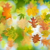 Image of autumn leaf — Stock Photo
