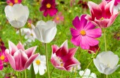 Different flowers in a park — Stock Photo