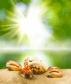 Seashell on water background — Stock Photo