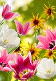 Imagen de flores diferentes — Foto de Stock
