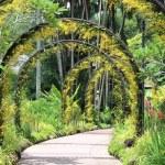 Path in botanical garden — Stock Photo #66929035