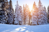 Winter background with trees — Stock Photo