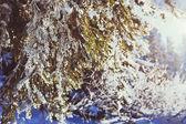 зимний лесной фон — Стоковое фото