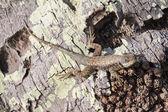 Lizard on trunk detail — Stock Photo