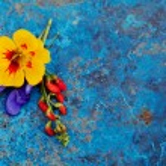 Summer flowers — Stock Photo #53147469