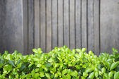 Green leaves on wood background — Foto de Stock