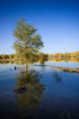 Inner Mongolia, China Populus euphratica — Stock Photo