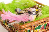 Bird sitting in a nest with Easter quail eggs on a white background — Foto de Stock