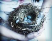 Bird's nest in young woman's arms — Stockfoto