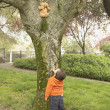 Young boy looking at teddy bear in tree — Stock Photo #52038403