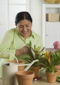 Senior Hispanic woman gardening indoors — Foto de Stock