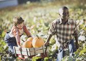 Two boys pulling wagon through pumpkin patch — Stock Photo