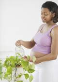 Pregnant African American woman watering plant — Stok fotoğraf
