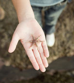 Hispanic girl holding starfish — Stock Photo
