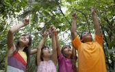 Hispanic children pointing up in woods — Stock Photo