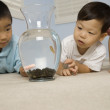 Asian brothers looking at fish — Stock Photo #52080591