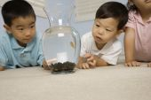 Asian brothers looking at fish — Stock Photo