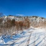 Winter landscape — Stock Photo #76926483