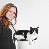Beautiful british black and white cat. — Stock Photo