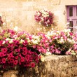 Old stone house decorated with colorful petunia flowers — Stock Photo #56093191