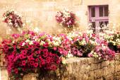 Old stone house decorated with colorful petunia flowers — Stock Photo
