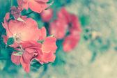 Pink dog roses — 图库照片