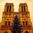 Christmas tree in front of the Notre Dame cathedral — Stock Photo #60986713