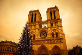 Christmas tree in front of the Notre Dame cathedral — Stock Photo