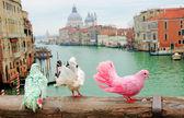 Three colorful pigeons on bridge — Stock Photo