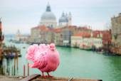 Pink pigeon on bridge — Stock Photo